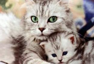 Самые лучшие родители в мире животных