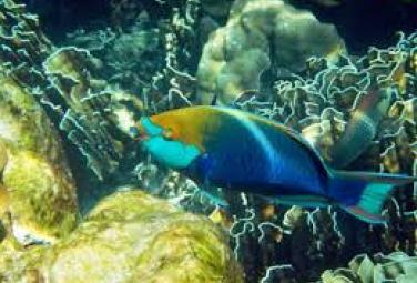 Самые красивые морские обитатели