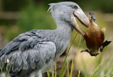 Животные и их еда - самые необычные способы пропитания